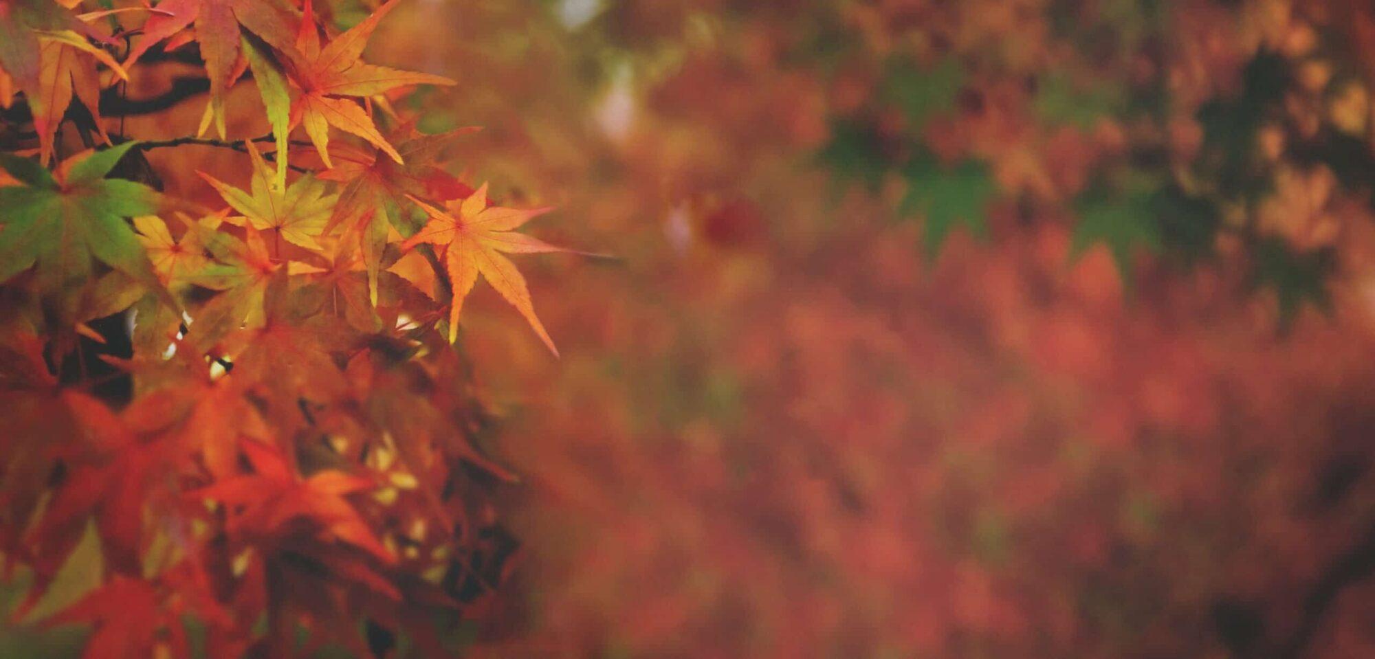 EMLF to hold Fall Symposium October 12-14